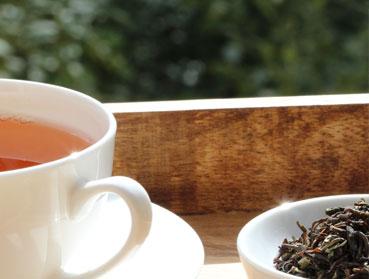 Earl Grey Tee und Kombucha. Welcher Tee ist der Richtige zur Herstellung von Kombucha? Diese Frage beantworten wir Ihnen hier - erfahren Sie welche Teesorte sich am besten für Ihren Kombuchapilz (Teepilz, Tibi) eignet, wie einfach die Herstellung ist sowie wie die Wirkung des Tee auf Kombucha ist. Egal ob Schwarzer Tee, Grüner Tee, Mate-Tee, Gelber Tee, Darjeeling, Weißer Tee oder Pu-Erh-Tee - wir liefern Ihnen alle Informationen, die Sie im Umgang der Teesorten und Kombucha brauchen.