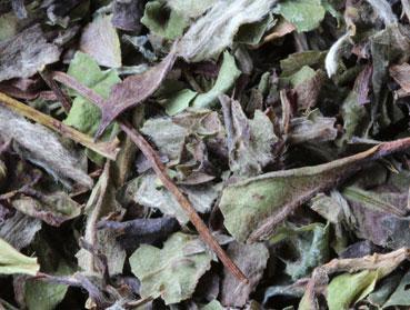 Weißer Tee und Kombucha. Welcher Tee ist der Richtige zur Herstellung von Kombucha? Diese Frage beantworten wir Ihnen hier - erfahren Sie welche Teesorte sich am besten für Ihren Kombuchapilz (Teepilz, Tibi) eignet, wie einfach die Herstellung ist sowie wie die Wirkung des Tee auf Kombucha ist. Egal ob Schwarzer Tee, Grüner Tee, Mate-Tee, Gelber Tee, Darjeeling, Weißer Tee oder Pu-Erh-Tee - wir liefern Ihnen alle Informationen, die Sie im Umgang der Teesorten und Kombucha brauchen.